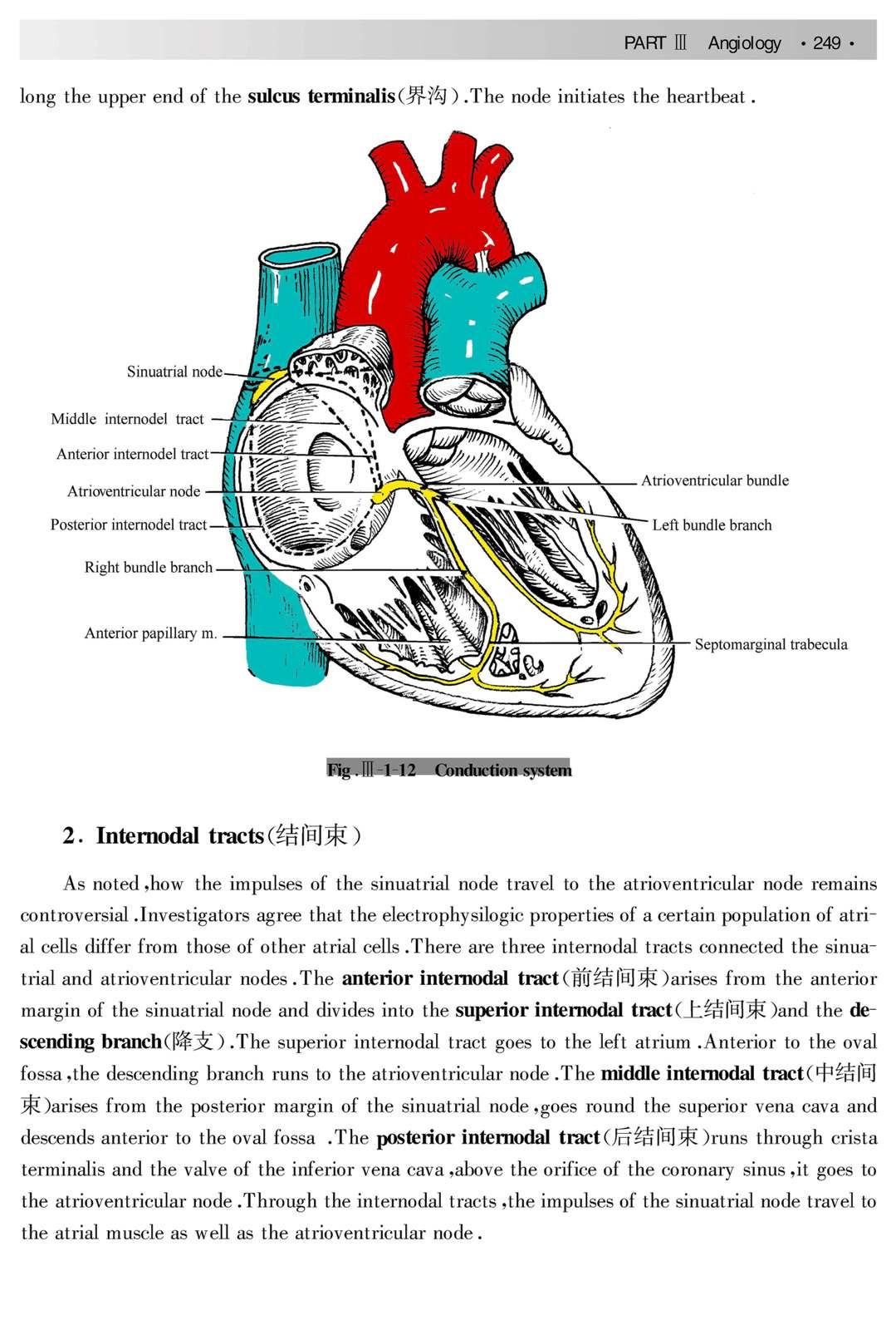 系统解剖学课件 系统解剖学ppt课件 系统解剖学课件下载