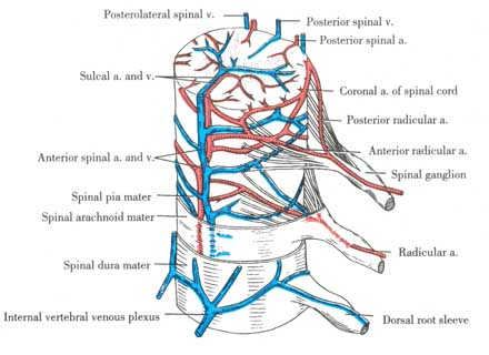 Vertebral Vein Diagram - Data Wiring Diagrams •